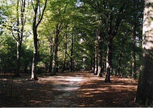 Kapellen-Streepstraat: dreef in de bossen van Het Rood