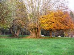 Houtkant met sporen van een oude kaphaag, hakhout en opgaande bomen