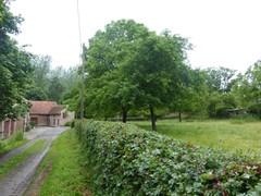 Notelaarboomgaard met gevlochten meidoornhaag
