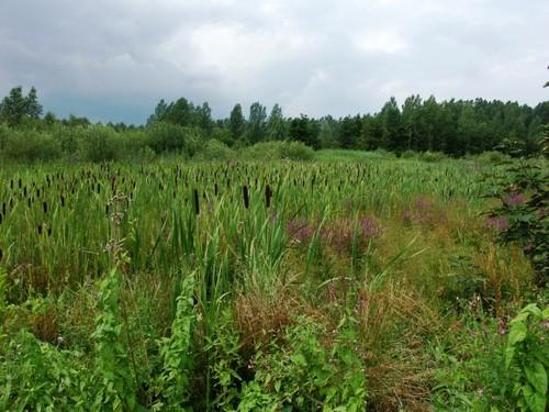 Zennegat-Battenbroek: Natuurrerservaat 'Den Battelaar' in de Dijlevallei