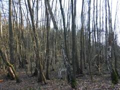 Vallei van de Bosbeek en De Houw