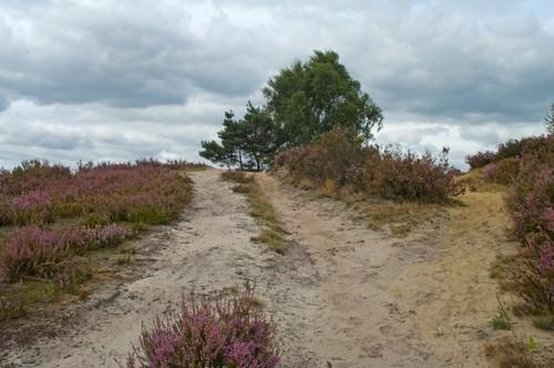 Heidelandschap en duinen in Terhaagdoornheide