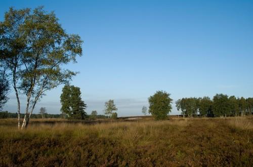Heidelandschap in het voormalige militair domein Molenheide