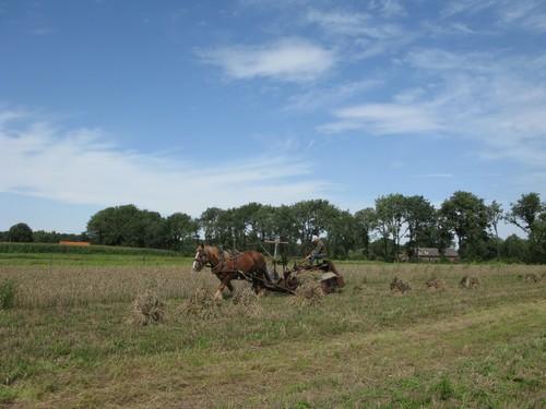 Traditioneel akkerbeheer in het Hoksent