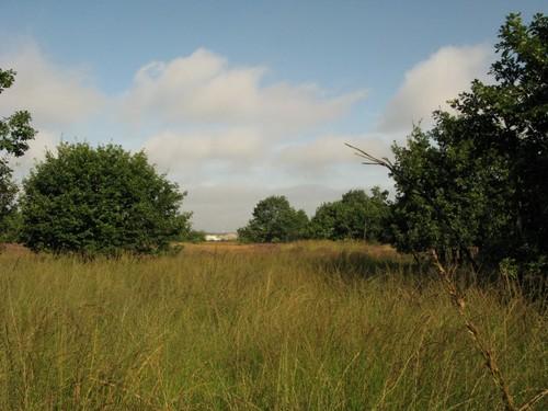 Hakhoutbosjes in de Mechelse Heide
