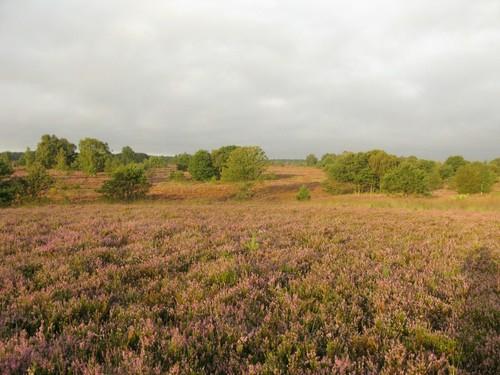 De Mechelse Heide te Maasmechelen