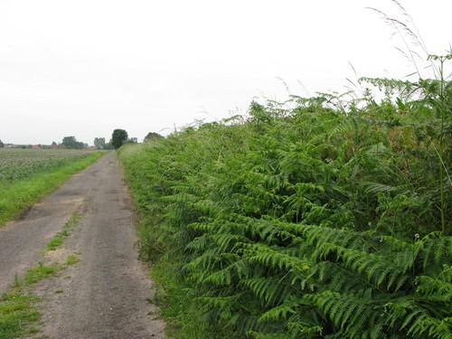 Onverharde weg langs Graaf Jansdijk