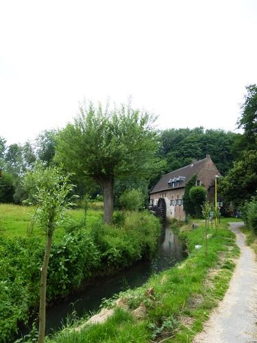 Grimbergen Rijkenhoekstraat knotboom van zwarte populier bij Liermolen
