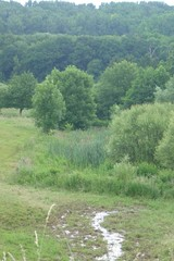 Voeren bronbeek Bounder bij vallei van de Gulp bij Teuven (https://id.erfgoed.net/afbeeldingen/220935)