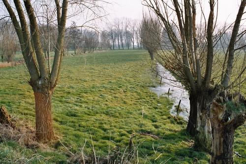 Nevele Merendree Meersstraat weilanden met knotbomenrijen in de vallei van de Oude Kale