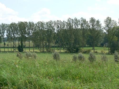 Zottegem Velzeke-Ruddershove Paddestraat Beekbegeleidende beplanting langs Molenbeek zijvallei van de Zwalm