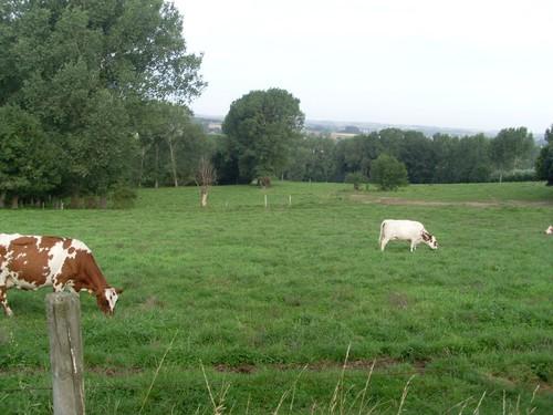 Maarkedal Bossenaarstraat steile westelijke helling Bossenareheuvel en vallei Nederaalbeek
