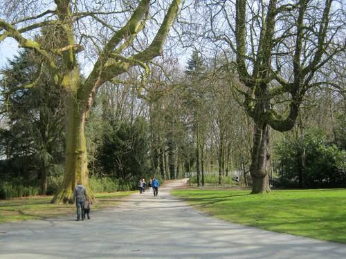 Monumentale bomen Middelheimpark