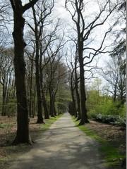 Dreef Middelheimpark (https://id.erfgoed.net/afbeeldingen/222333)