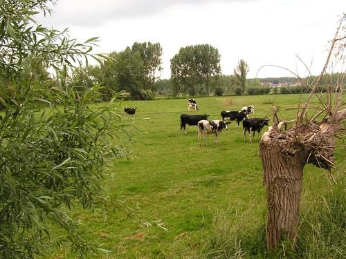 Agrarisch gebied rond Durme