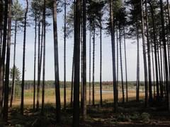 Abdij en bos van Averbode en Gerhagen