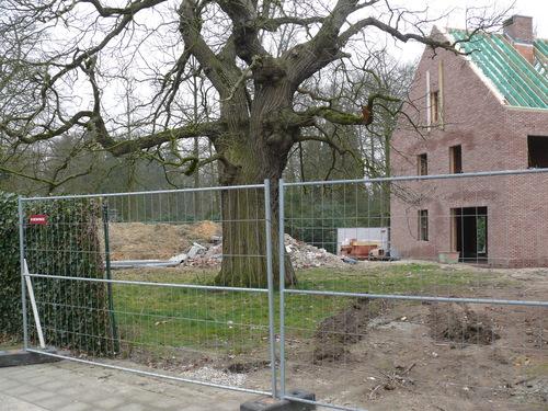 Sint-Niklaas Belsele Vijverstraat 1 Tamme kastanje (4)