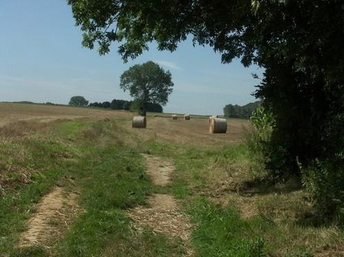 Veldweg met solitaire boom op het plateau te oosten van Leefdaal