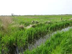 Zwaanhoek en omgeving