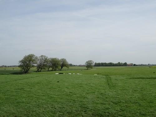 poldergraslandcomplex nabij het Hagebruggeleed