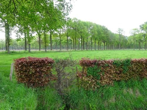 dambordvormig drevenpatroon nabij Munkebossen
