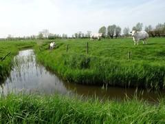 Polders nabij Dudzele