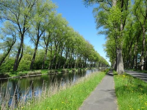 opgaande populierenrijen langsheen de Damse vaart nabij Oostkerke