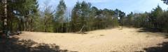 Paraboolduinen met eikenhakhout en konijnenwarande in het stuifzandcomplex op de heuvelrug tussen Lichtaart en Kasterlee