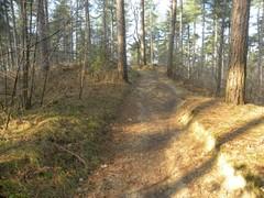 Heuvelrug tussen Lichtaart en Kasterlee