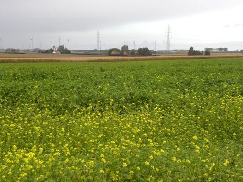 Langemark, Pilkem ridge, Hoge Ziekenweg 7, zicht over het slagveld van Pilkem ridge in noordwestelijke richting