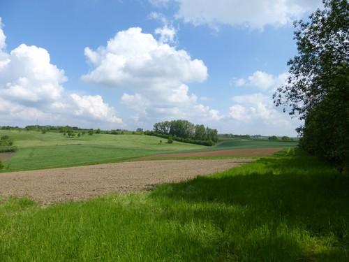 Zicht vanaf Manshovenbos richting Romeinse weg