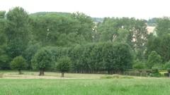 Vallei van de Perlinckbeek