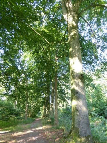 Eeklo Dam Het Leen bomenrij langs Burggravenstroom
