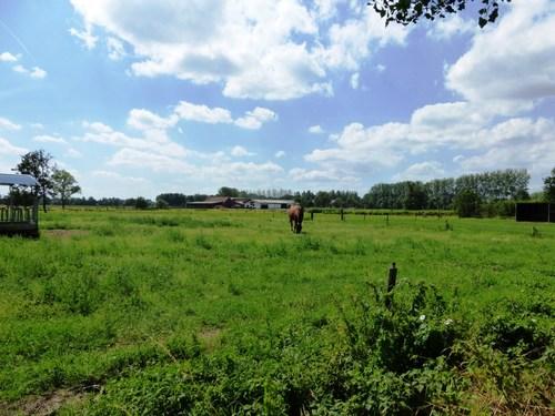 Laarne Lagen Heirweg weiden rond Goed te Cattenaye