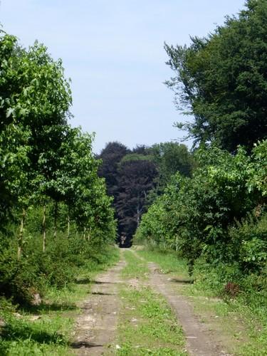 Dreef, onderdeel van stervormige boscomplex