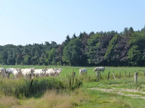Agrarisch landschap rond Schrieken (parkbomen in bos)