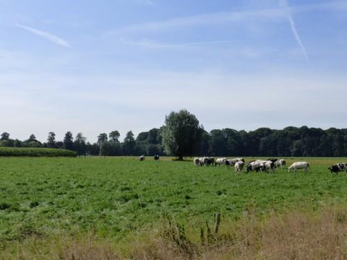 Agrarisch landschap Hemelrijk
