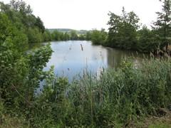 Scheldemeanders nabij Avelgem