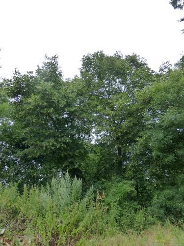 Borgloon, Bommershoven, Oude Kassei, Puesboom