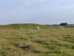 Omgeving site Ten Doele