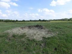 Duinen van Ter Yde, Hannecartbos en Oostvoorduinen