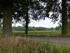 Vallei van de Nieuwermolenbeek met Vrijthoutbos en Moretteberg