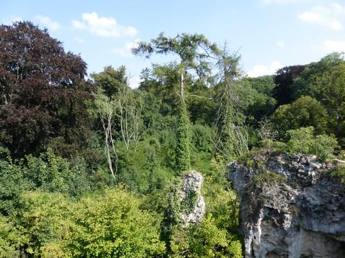 Bos van Kolmont, diverse parkbomen