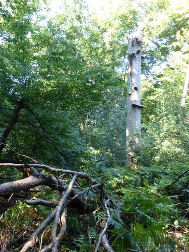 Bos van Kolmont, doodhout