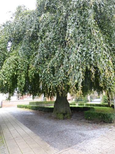 Borgloon Gotemstraat 54 Toegangsdreef naar het kerkhof