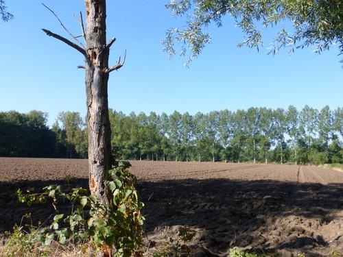 Akker met op de achtergrond beekbegeleidende bossen langs de Tappelbeek