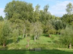 Hoogstamboomgaard langs Scheldedijk