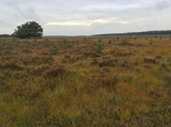Heide- en stuifzandcomplex van Hechtel-Helchteren met vallei van de Zwarte Beek (bovenloop)