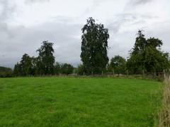 Gemengde hoogstamboomgaard met veekeringshaag