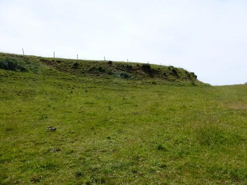 Voeren,  Moelingen, vallei van de Berwijn, relicten van houtkant op talud